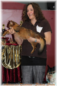 Best in Show - Kitten & Best in Variety